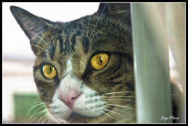 Eyes of cat