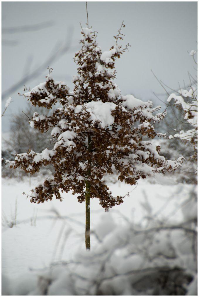 Arbol nevado I
