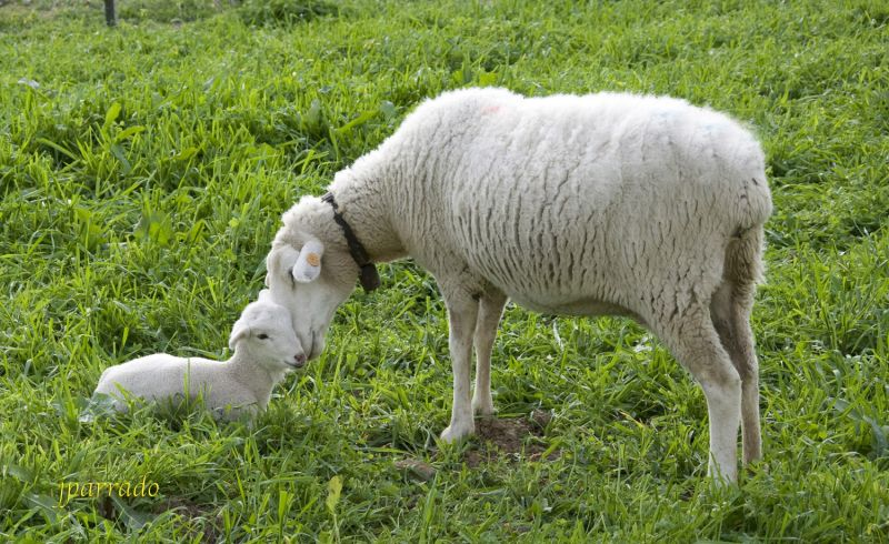 Madre & Hijo