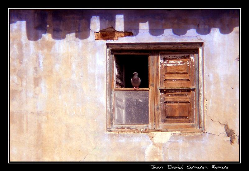 Una paloma en la ventana