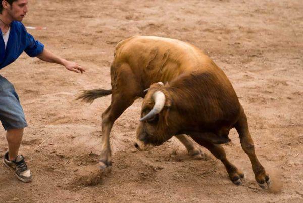 Toro, Toro!