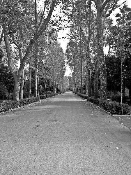 Alameda en Parque María Luisa