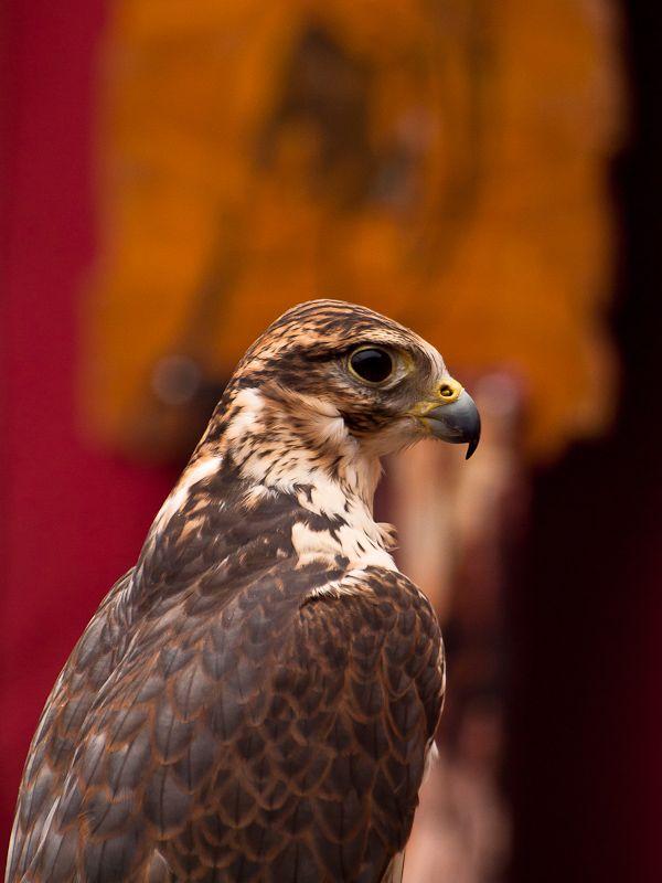 Eagles at the Medieval Market