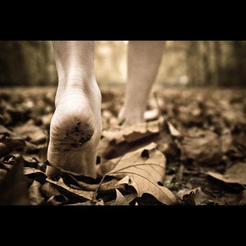Marche à travers l'automne