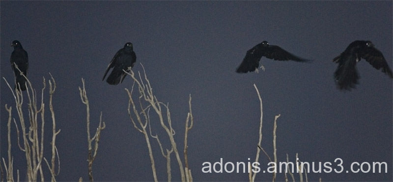 Dark Flyers