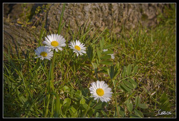 El pais de las flores