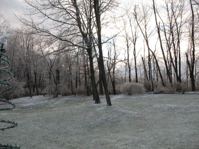 Frosted trees.