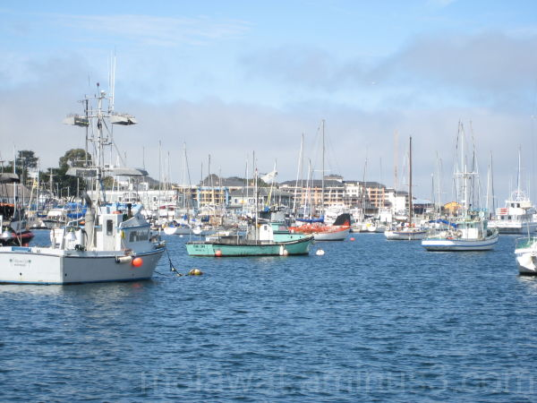 Sail Boats in the Harbour