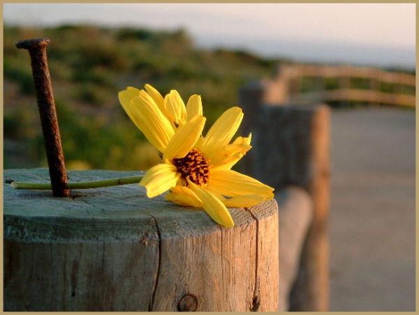 Yellow FLower on Post