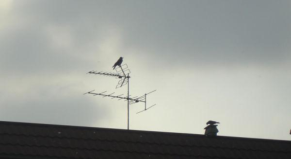 No more birds , so more air pollution