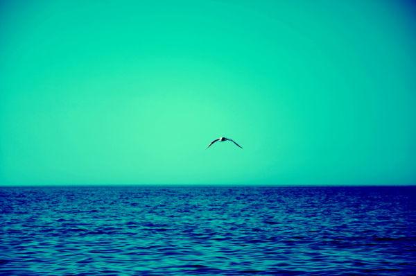 TALK TO SEA...