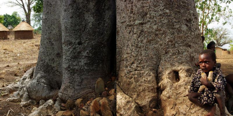 Enfant et Baobab