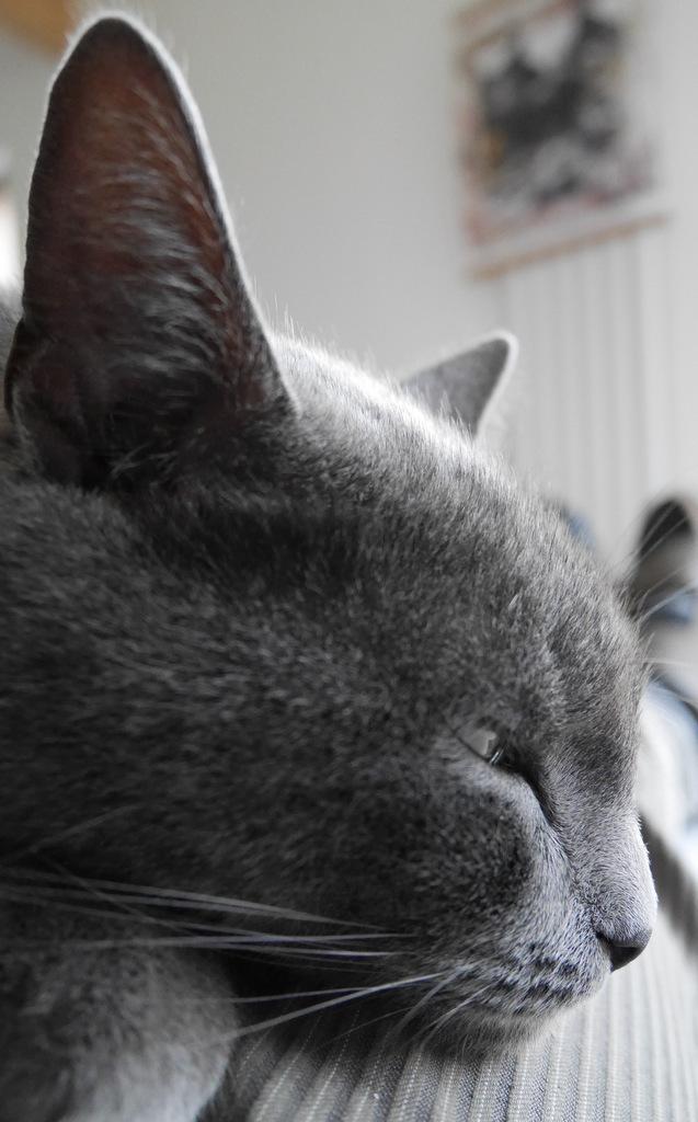 la nuit tous les chats sont ...