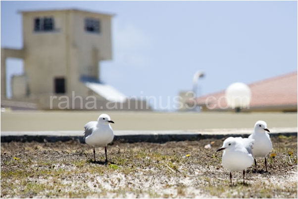 free birds ...