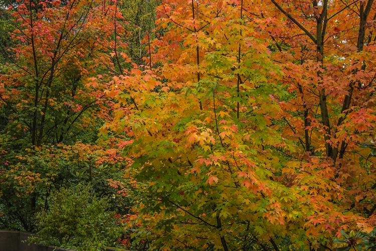 Fire Amongst Leaves