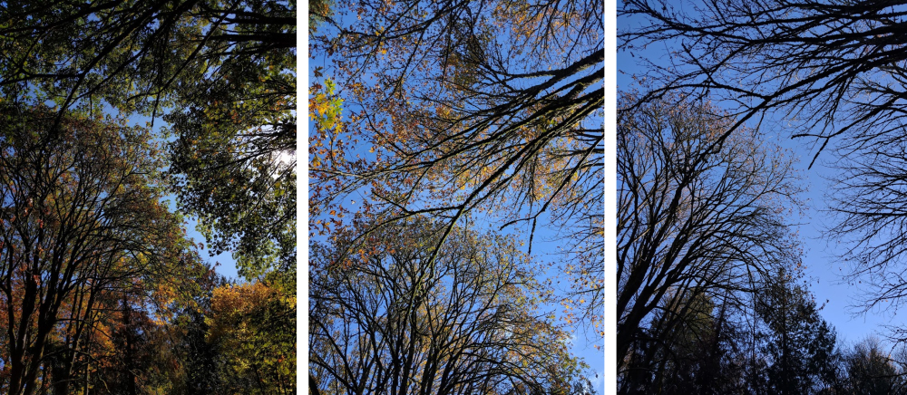 Stages of Autumn