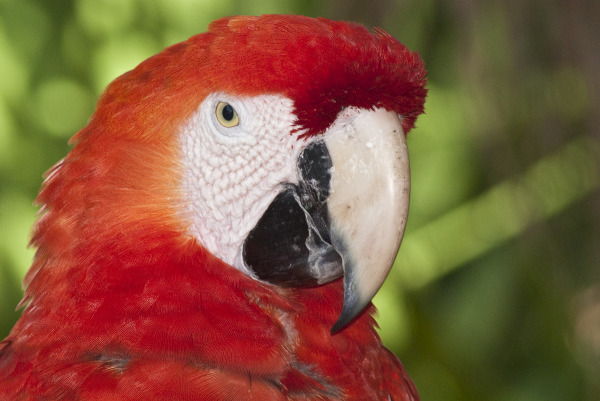 Another Parrot