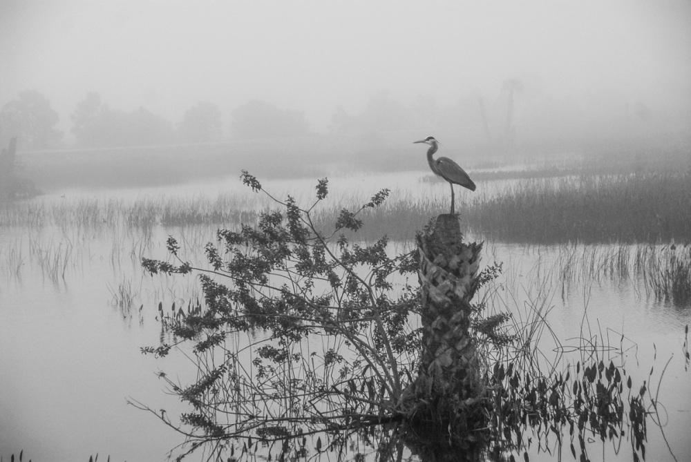 Foggy Sentinel