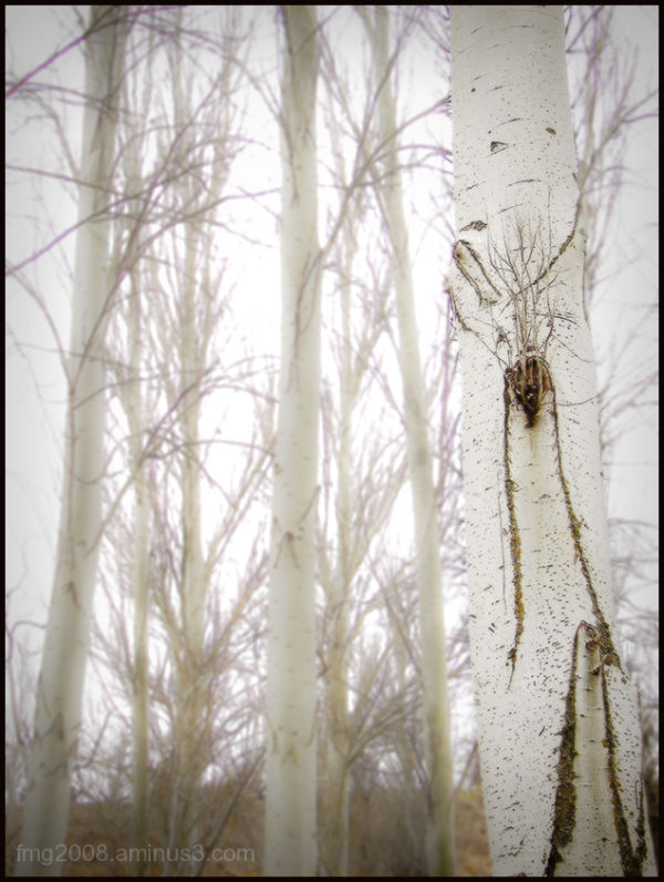in the wood near home.
