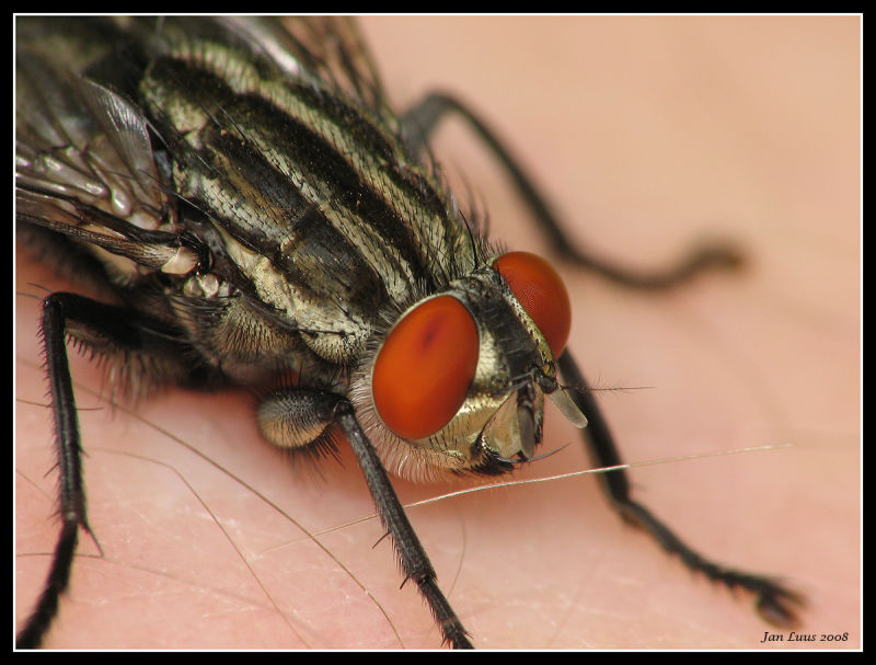 Yet another view of the Fly