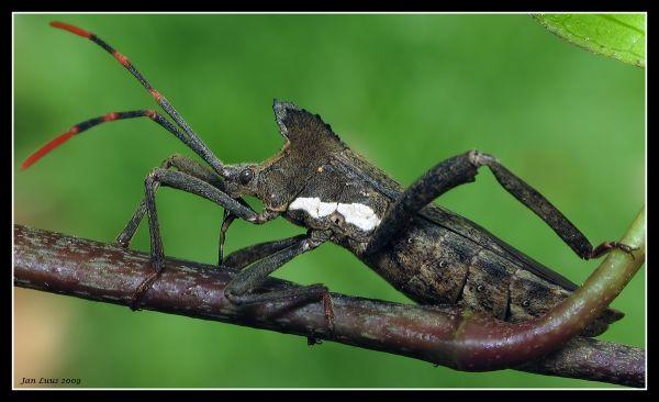 Bug close-up macro jan luus