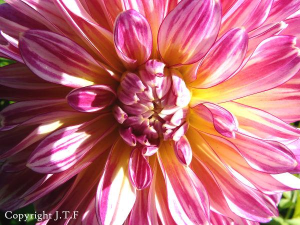 flower, spring, color
