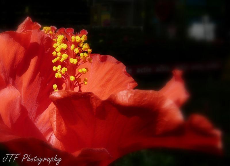 flower. summer , colour