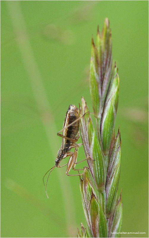 Insecte à identifier