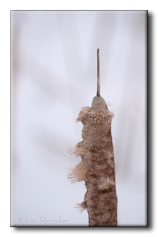 Vestige - Quenouille