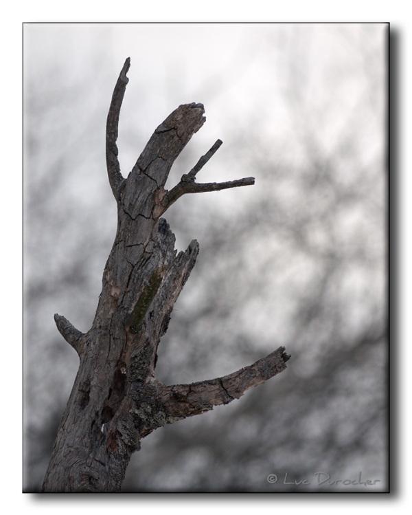 Fantôme d'arbre