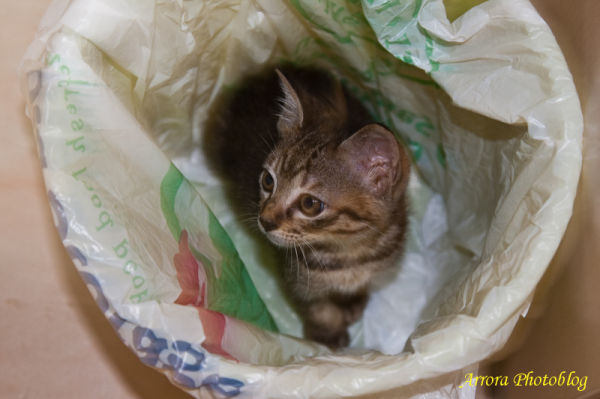 Cat in the trash bin