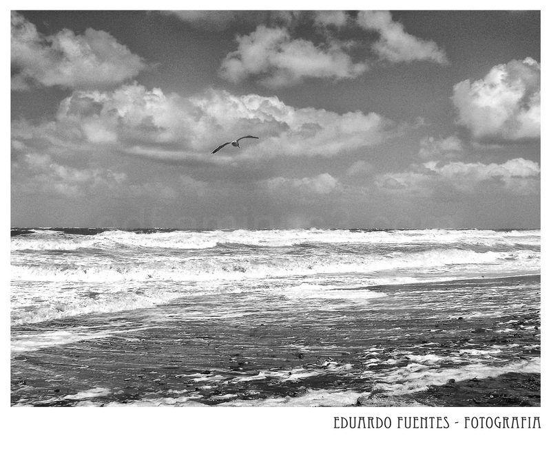 La Gaviota y el Mar