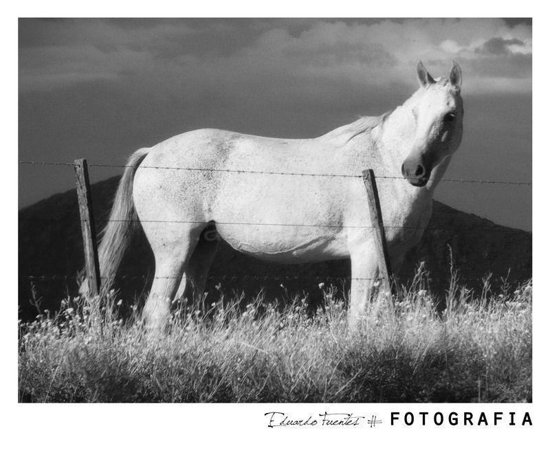 Equus (III)