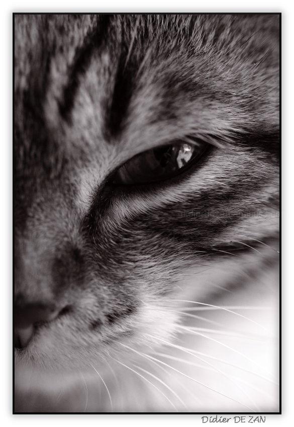 Miaou .....