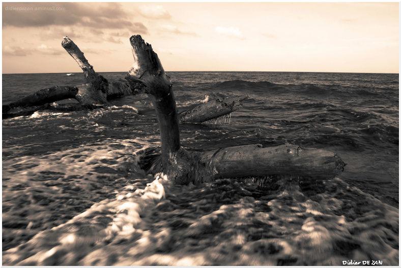 Sea Monster ....