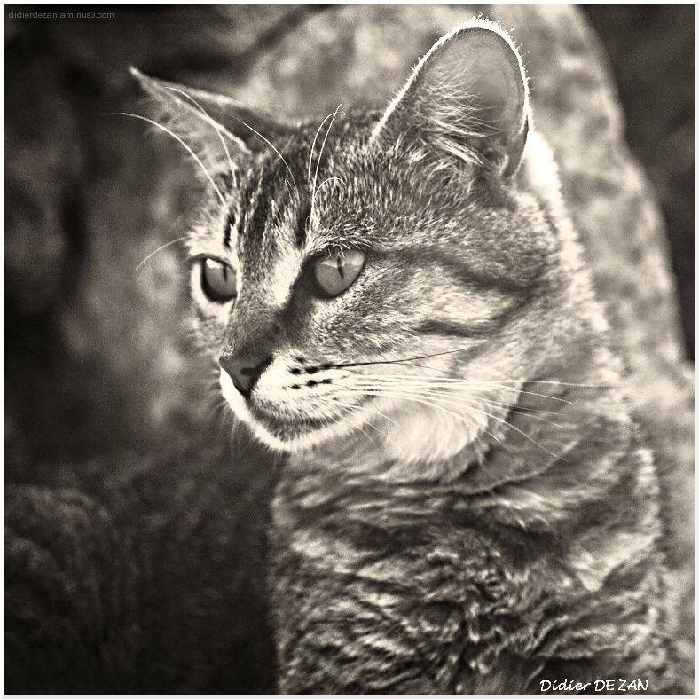 Miaou....