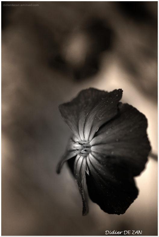 .....a flower !!!!
