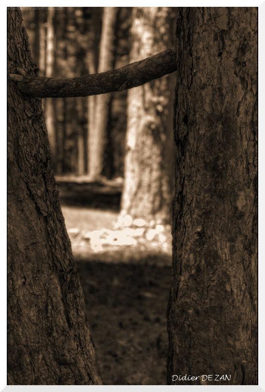 Dans les bois ...