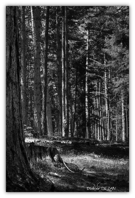 Promenade en forêt .....
