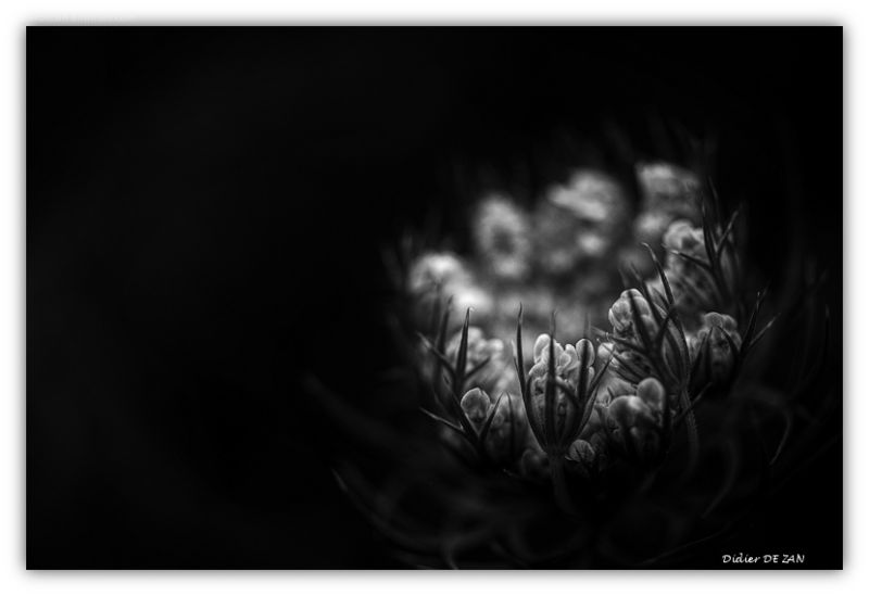 Petite fleur....