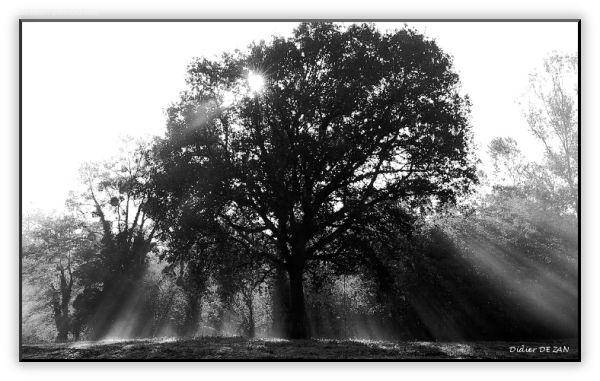De la brume dans les feuilles ...