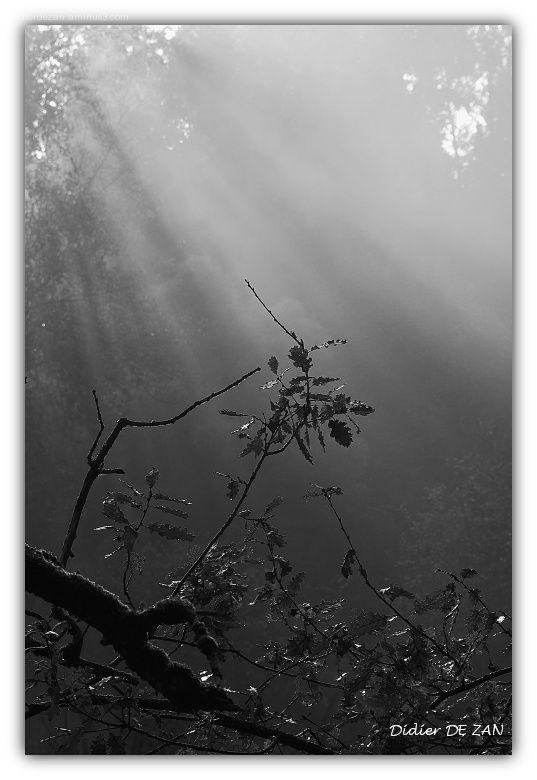 Quelques feuilles dans la brume .....