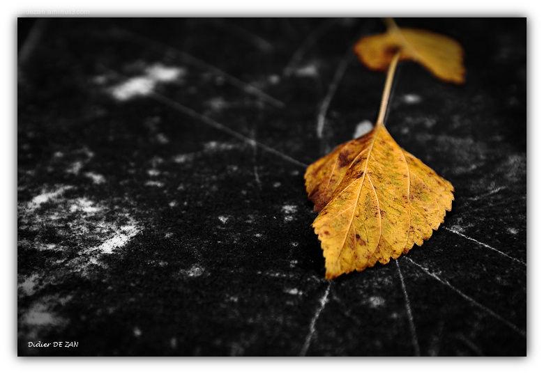 Une feuille d'automne ....