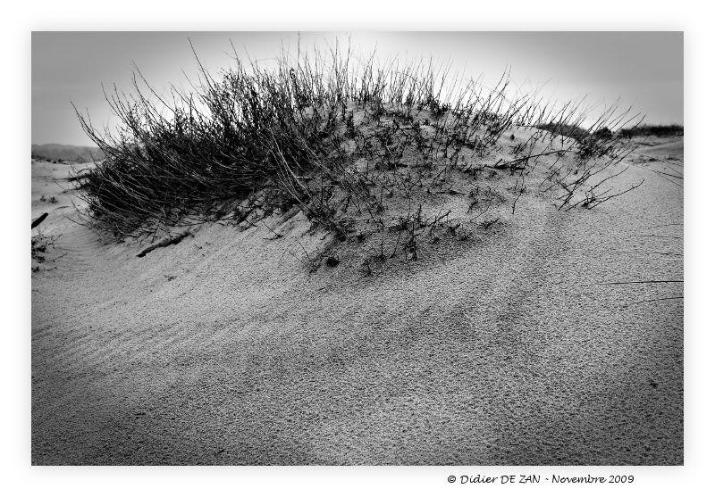 Dune .....