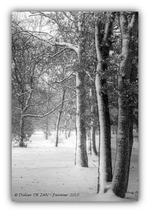 Sous la neige ....