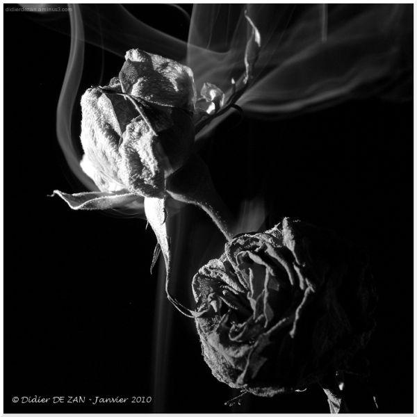 Roses ....