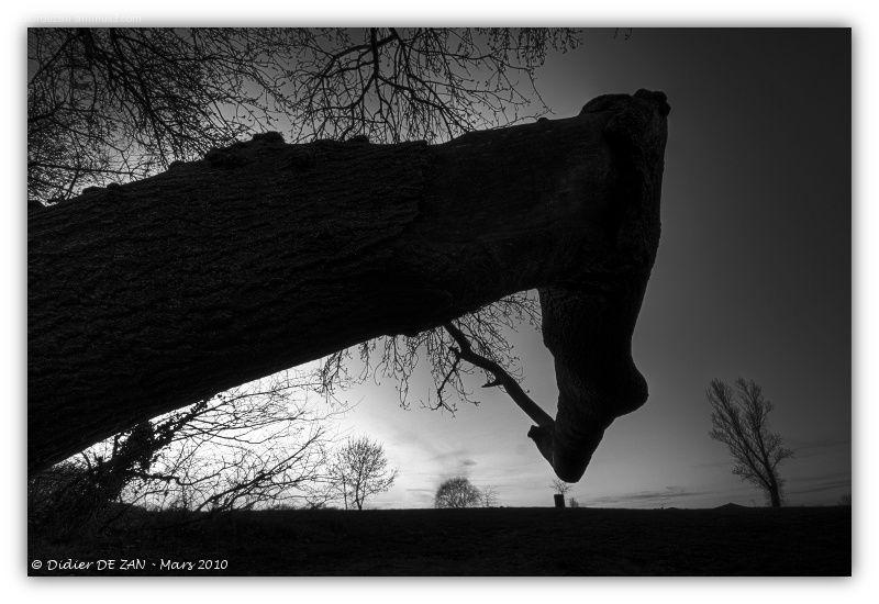 Auprés de mon arbre ....