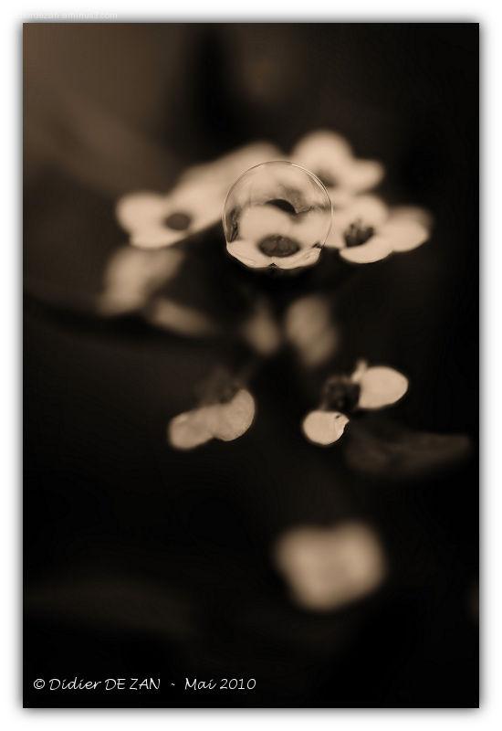 Petite fleur ....