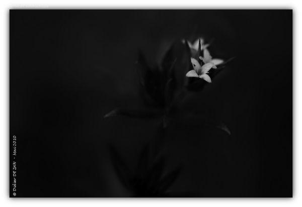 Petite fleur .....