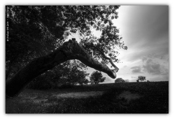 Auprés de mon arbre .....